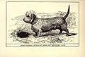 Dandy-Dinmont Terrier BDL.jpg