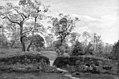 Dankvart Dreyer - The Fringe of a Wood - KMS6896 - Statens Museum for Kunst.jpg