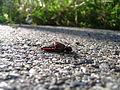 Dead grasshopper 1.jpg