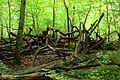 Dead trees Dalby Söderskog.jpg