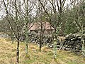 Deciduous trees and hut - geograph.org.uk - 346613.jpg