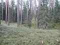 Degučių sen., Lithuania - panoramio (190).jpg