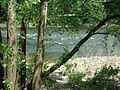 Delaware River view through trees at Forks Township PA.jpg