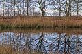 Delleboersterheide – Catspoele Natuurgebied van It Fryske Gea. Bomen spiegelen in Catspoele 02.jpg