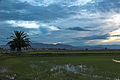Delte Ebre zona-laBanya 0992-01.jpg