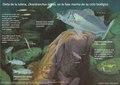 Dieta de la lubina, Dicentrarchus labrax, en la fase marina de su ciclo biológico.pdf