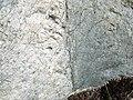 Dike intruding tillite (Nipissing Diabase & Gowganda Formation, Paleoproterozoic; Percival Lake roadcut, Ontario, Canada) 15 (47674670232).jpg