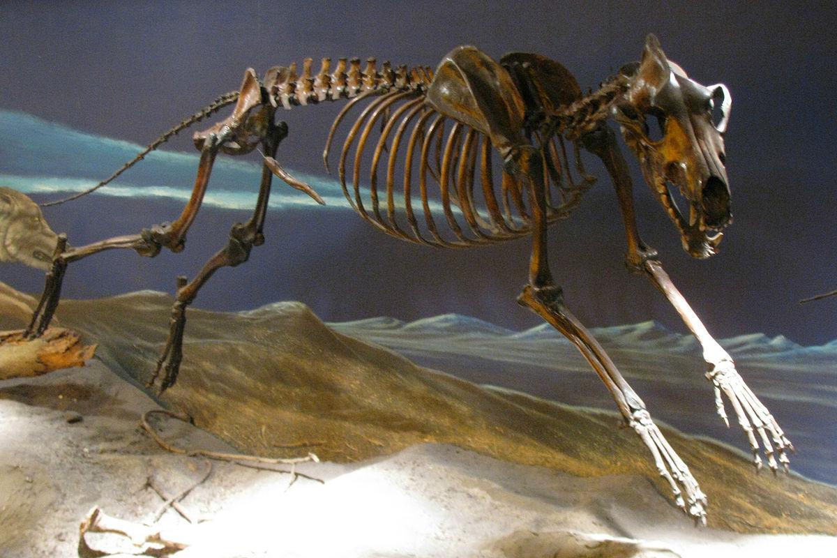 Dire Wolf Skeleton.jpg