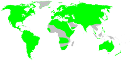 Distribution.dictynidae.1.png
