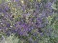 Djimla blue flowers.jpg
