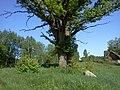 Dobelnieki - panoramio (12).jpg