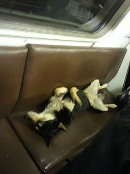Dog asleep on the Moscow Metro