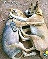 Dogs relaxing.jpg