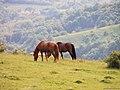 Domasnea, Romania - panoramio.jpg