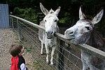 Donkey-11.jpg