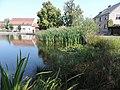 Dorfteich in Merzdorf -2 - panoramio.jpg