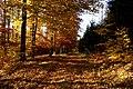 Droga na Radzim jesienią.jpg