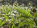 Dscn0191 japan nature.jpg