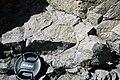 Dunham Dolomite (Lower Cambrian; Route 2 roadcut, southeast of the Lamoille River bridge, Vermont, USA) 10.jpg