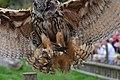 Eagle Owl Landing (7913351480).jpg