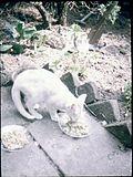 Eatingcat.jpg