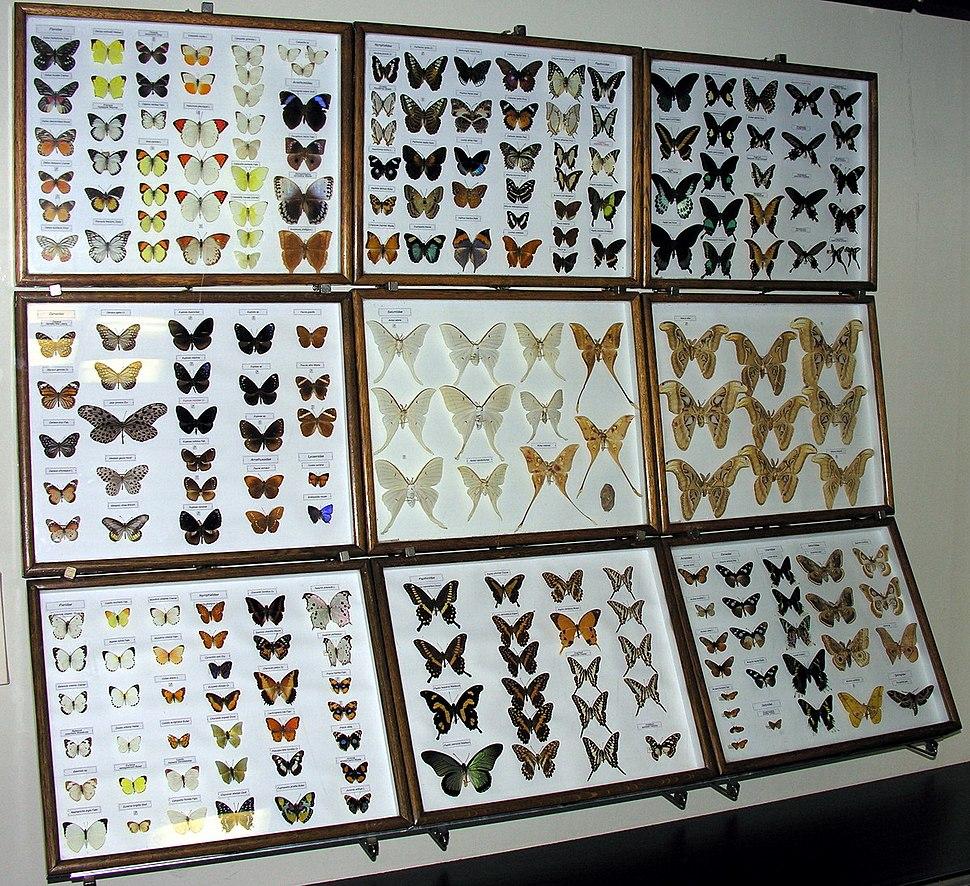 Egzotiniai drugiai, 2006-12-02