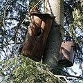 Eichhörnchen-Jungtiere auf Kobel.jpg