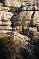 El Torcal de Antequera - 010 - Wild goats.jpg