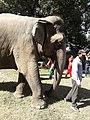 Elephant20171111 122227.jpg