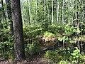 Espoo, Finland - panoramio (40).jpg