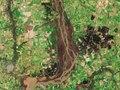Esteros de Farrapos e Islas del Rao Uruguay S2B MSI L1C 17August2018 432 MM crop.tif