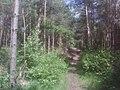 Eystrup- Mahler Holz - geo.hlipp.de - 11243.jpg