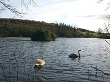 Serene lake with two swans and islet with woods in background