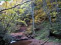 Fall-foliage-hills-creek - West Virginia - ForestWander.jpg