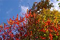 Fall Colours (2908201437).jpg