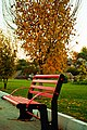 Fall and Chair - panoramio.jpg