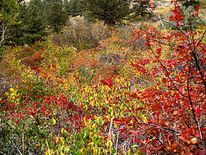 Larimer County, Colorado - Fall colors, Poudre Canyon