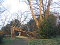 Fallen tree in Maryon Park - geograph.org.uk - 333735.jpg