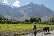 Farming in Suru Valley, Ladakh.jpg
