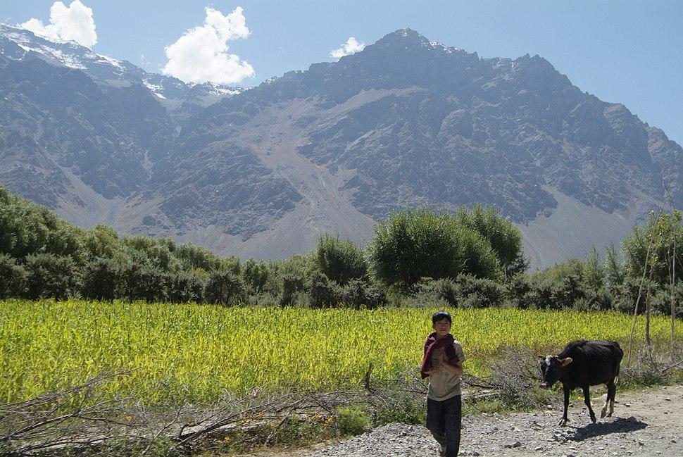 Farming in Suru Valley, Ladakh