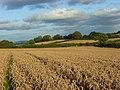 Farmland, Newton Tracey - geograph.org.uk - 964789.jpg