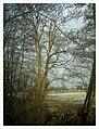 February Backstrike Winter Colors - Magic Rhine Valley Photography 2013 - panoramio (3).jpg