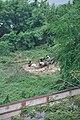 Felled Tree 7785.JPG