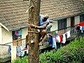 Felling trees 10.jpg