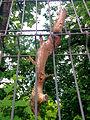 Fence MG 20150517 125512.jpg