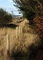 Fence alongside the B3212 - geograph.org.uk - 1584464.jpg