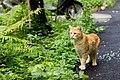 Feral cat in Krasnodar 2012-07-01.jpg
