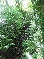 Ferns in the trees - August 2011 - panoramio.jpg