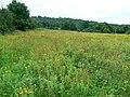 Field near Brookthorpe - geograph.org.uk - 940875.jpg