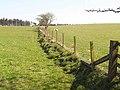 Fields and fence near Bavington Mount - geograph.org.uk - 1267701.jpg